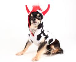 halloween hoodie dog costume cow mohawk with red horns dog hoodie pet it dog apparel