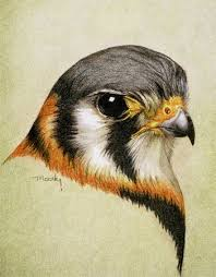 1248 best colored pencils images on pinterest painting colored
