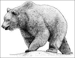 grizzly bear ursus arctos horribilis line art and full color