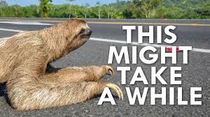 Make A Sloth Meme - why are sloths so slow youtube