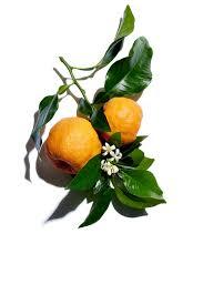 moisture rich body lotion moisturizing lotion clarins bitter orange