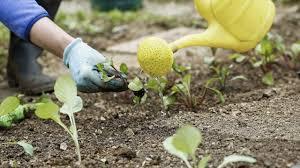 Garden Soil Types - before planting garden test soil type nutrient levels soil