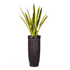 laura ashley 56 in tall snake plant in planter vhx121214 the