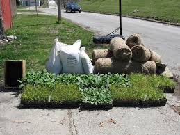 native plant plugs save maumee earth day river clean up 2009 report updates and
