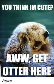 Aww Memes - you think im cute aww get otterhere awww aww meme on me me
