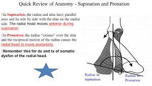 anatomy of radius and ulna gallery learn human anatomy image