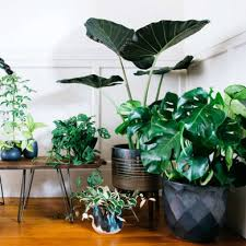 Indoor Plant Design by 19 Ways To Design With Houseplants Sfgate