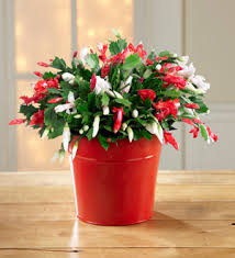 flower shops in jacksonville fl arlington flower shop make it merry christmas cactus jacksonville