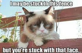 Funny Grumpy Cat Memes - grumpy cat meme 15
