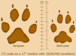 wolf paws our in the pack