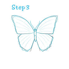 how to draw a butterfly beginning sketch2draw com