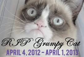 Grumpy Cat Has Died Youtube - sourcefed video reports grumpy cat has died life no longer has