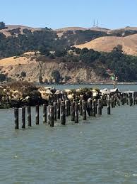 benicia public pier u0026 beach ca top tips before you go with