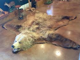 Taxidermy Bear Rug Mount Huge Alaskan Kodiak Brown Bear Rug Taxidermy Mount For Sale