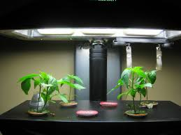 growing aerogarden chili peppers