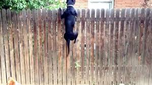 top fencing options for dogs quality dog fence