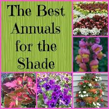 Flower Shrubs For Shaded Areas - best 25 shade annuals ideas on pinterest plants for shady areas