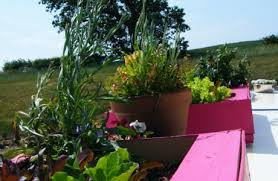 nomadic permaculture u0026 how to make a roof garden on a narrowboat