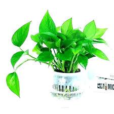 plants for office desk plants for office desk best desk plants for the office plants for