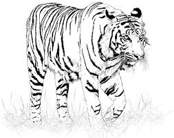 black and white tiger vector free vector in encapsulated