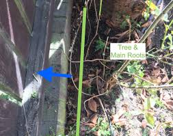 pruning how should i deal with tree root pushing on brick