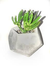 Concrete Succulent Planter Gollum Succulent In Concrete Succulent Planter Cacti Cactus