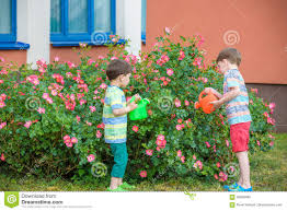 family gardening two little kid boys watering roses with can in garden family
