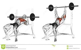 bench dip spieren google zoeken anatomy of the muscles during