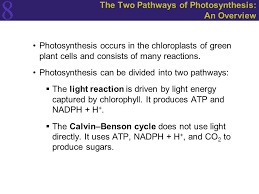 The Light Reactions Of Photosynthesis Use And Produce Photosynthesis Energy From The Sun Ppt Download