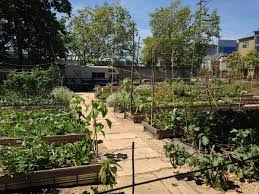 What Is An Urban Garden Urban Agriculture In West Oakland Wikipedia