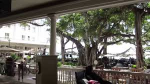 moana surfrider banyan tree beach bar waikiki beach 20150415