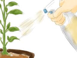 Homemade Pesticide For Vegetable Garden by 3 Ways To Make A Natural Insecticide Wikihow