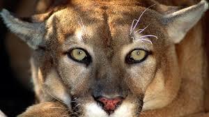 beautiful african animals safaris world u0027s most dangerous animals