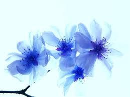 blue flowers blue flowers 14107 1024x768 px hdwallsource