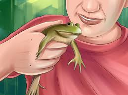 how to take care of an american bullfrog 14 steps with pictures