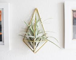 Wall Mount Planter by Gold Geometric Wall Mounted Air Plant Holder Idea Of 14 Ingenious