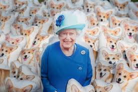 queen s dogs 90 corgi pillows are posed in photos to honor queen elizabeth for