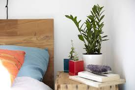 best house plants bedroom extraordinary best indoor air purifying plants bedroom