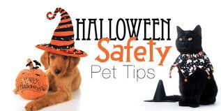 halloween pet safety animal accident u0026 emergency