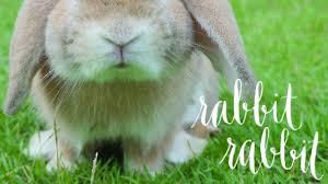 rabbit rabbit rabbit rabbit skillshare projects