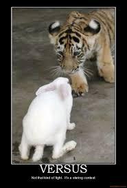Funny Tiger Memes - big cat memes big car