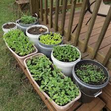 Vegetable Pot Garden by Fall Container Gardening Vegetables Gardening Ideas