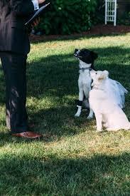 two rescue dogs become u0027furever u0027 friends in backyard wedding