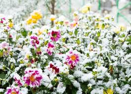 develop your garden in winter tips tricks and ideas for a