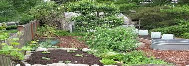 veggie gardens cascadia edible landscapes