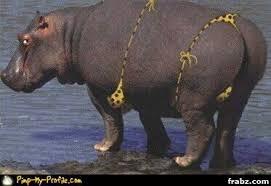 Hippo Memes - bikini hippo meme generator captionator caption generator frabz