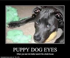 Puppy Dog Eyes Meme - puppy 0272ae 999134 jpg