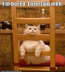 Bored Memes - i m bored entertain meh cheezburger funny memes funny pictures