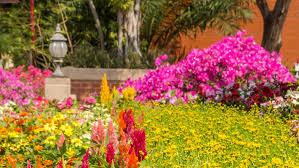 firecracker plants for the fourth garden style san antonio
