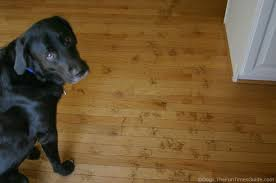 Best Flooring With Dogs Hardwood Flooring With Dogs Homes Floor Plans